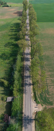 Rural road with old tree alley in nature park, vertical pano, aerial