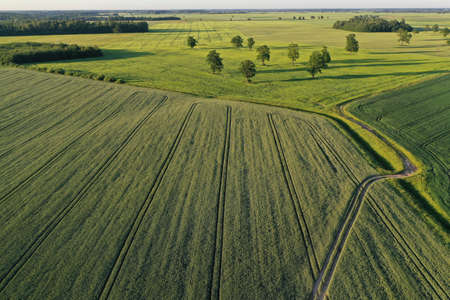 beautiful farmland landscape with grove, oaks and fields, aerial
