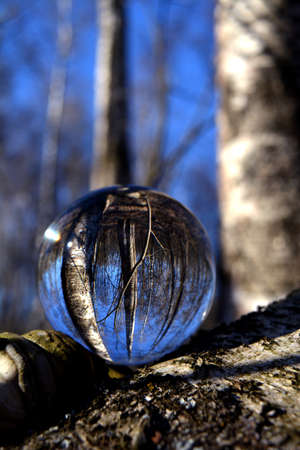 Transparent glass crystal ball in spring time birch forest Stockfoto
