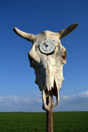 Time symbol old clock in cow skull cranium on blue sky background