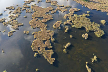 Reeds in lake water like a world map, aerial view Stok Fotoğraf