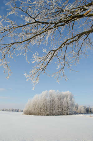 Winter farmland landscape with hoarfrost and tree branches