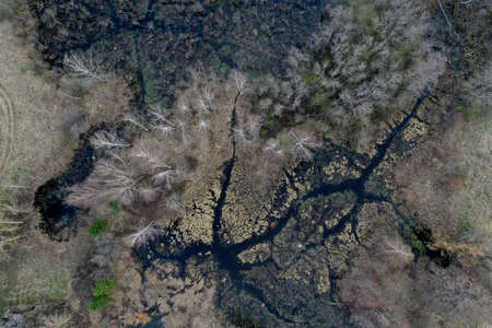 Swamp view from drone. Swampy landscape in early spring. View of an impassable swamp from height. Aerial photography.