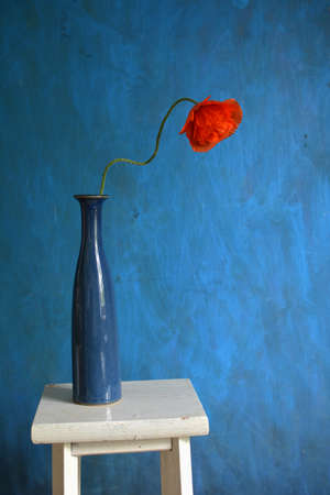 Red poppy in blue vase on white small table