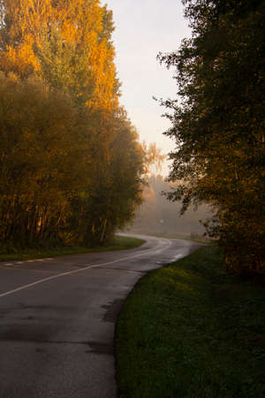 Empty autumn time road in forest