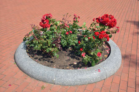 Circle flowerbed with flowers on street pavement