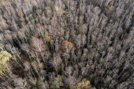 Autumn october time forest from drone, aerial view Stok Fotoğraf