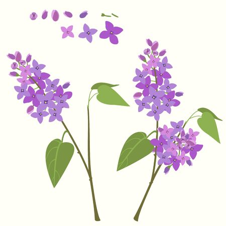 mauve: Flowering branch of lilac.