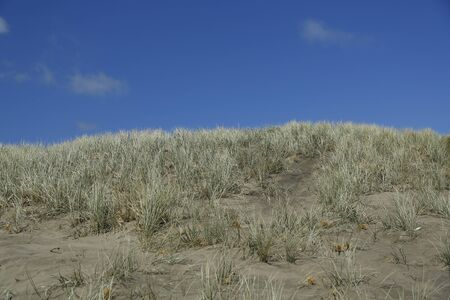 Sand dunes with the grass and blue sky.  Taken at phia beach in New Zeland.