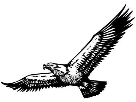 aigle: aigle volant Illustration