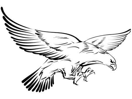 halcones: dibujo del águila Vectores