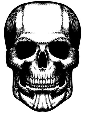 brainpan: hand drawn scull