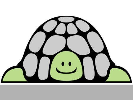 turtle isolated: turtle