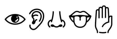 Graphic designation of the five main human senses.