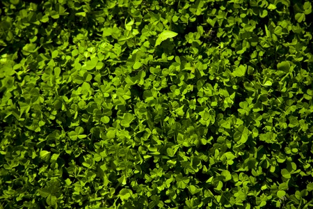 patrics: Green clovers leaf colorful background, saint patrics day Stock Photo