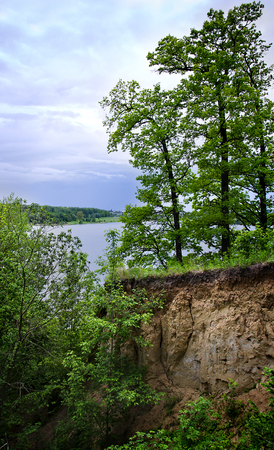 disturbance: Trees grow on the edge of the crumbling coast