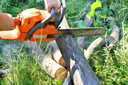 sawed: Cutting wooden logs electric chainsaw in the forest