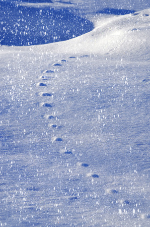 animal tracks: Snow relief pattern listed animal tracks in the snow. Winter background. Archivio Fotografico