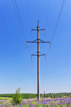 lupines: High-voltage electric pole with wires on a background of blue sky in a field of blooming lupines