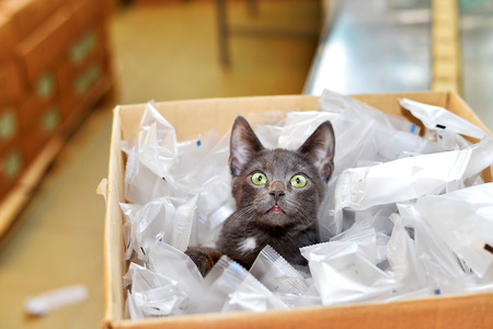 lumber room: Homeless cat sitting in a cardboard box including plastic packaging in stock.