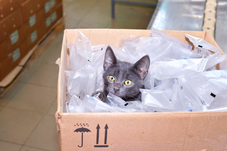 lumber room: Black cat sitting in a cardboard box including packing bags in the factory for the production of soap. Stock Photo