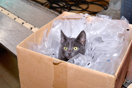 lumber room: Black cat sitting in a cardboard box including packing bags factory. Stock Photo
