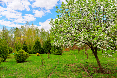 day flowering: Flowering trees in autumn garden on a sunny day. Stock Photo
