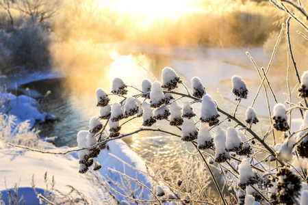 Bush tree in winter snow at sunrise and mist over the water. Stock Photo