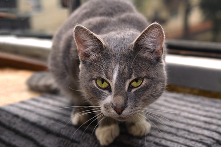 Gray striped cat looks sad at camera. 版權商用圖片