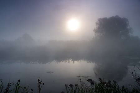Dramatic mystical twilight landscape with rising sun, tree, reed and fog over water Imagens