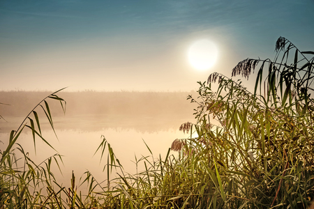 Incredible mystical morning landscape with rising sun, tree, reed and fog over the water