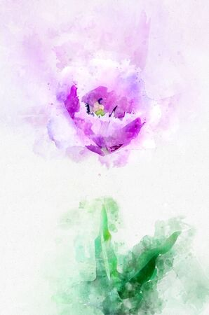 Flower lavender tulip in the country in the spring. Stylization in watercolor drawing.