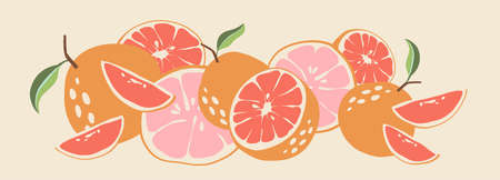 Abstract grapefruit. Composition citrus fresh. Healthy food for vegan in modern style, colorful fruits vector set. Horizontal illustration. Border line.