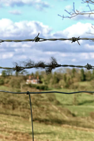 barbed wire: Barbed wire and lambs wood