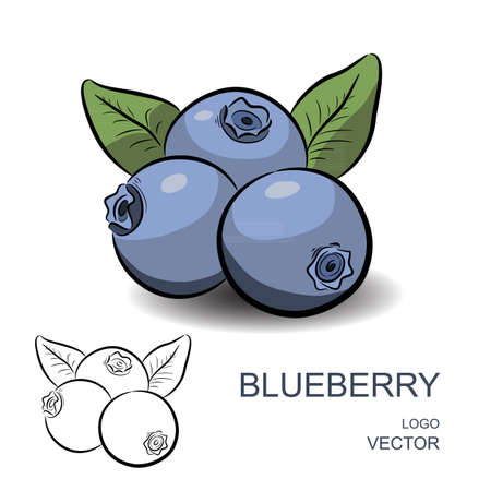 blue berry: Blueberry with flowers and leaves isolated on white background. Colorful and contour. Logo vector illustration