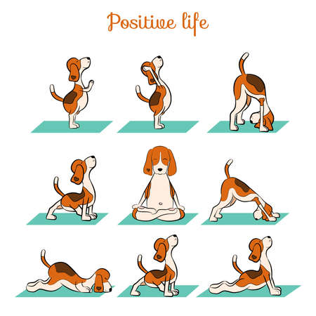 Cartoon funny dog beagle doing yoga position. Surya Namaskara. San Salutation. Vector illustration