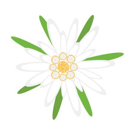Edelweiss flower, symbol of german Oktoberfest and alps