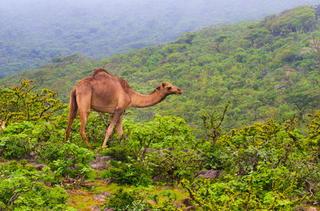 Salalah City in Oman in Ajman United Arab Emirates Stock Photo
