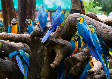 Colorful parrots in Bangkok zoo in Thailand
