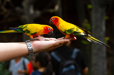 Colorful Birds eating from hand in Bangkok zoo in Thailand Stock Photo