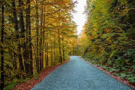 cobblestone paved forest path