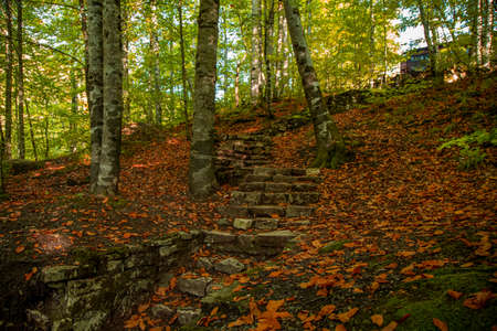 natural stone stairs between trees