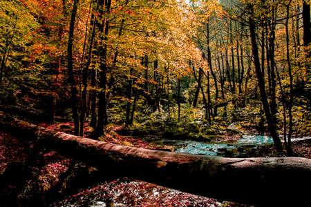 Impressive autumn landscape and tree bridge built on the river Stock fotó