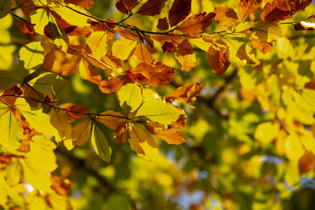 Colorful autumn background with leaves, close-up