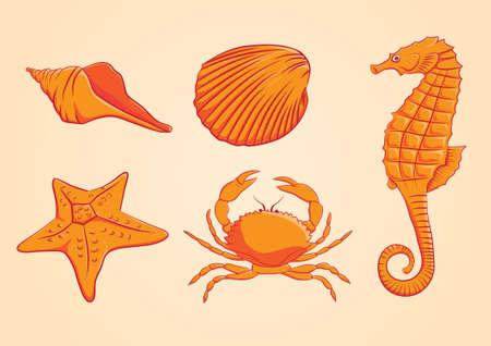 starfish on beach: Sea Animal Orange