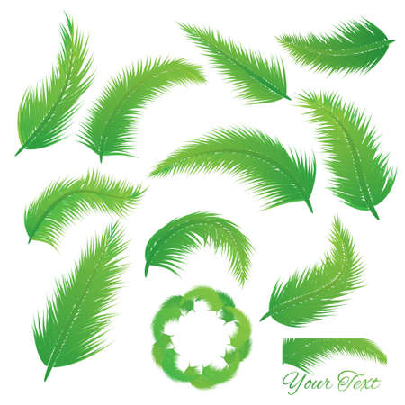coconut leaf: Coconut Leaf vector set