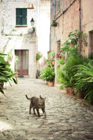Cat walking down the street in Valldemossa, Majorca, Balearic Islands, Spain photo
