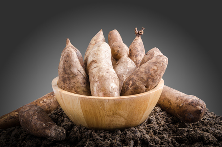yacon: Yacon roots on a bowl with dark background