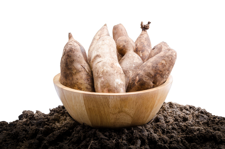 yacon: Yacon roots on a bowl with nature background Stock Photo