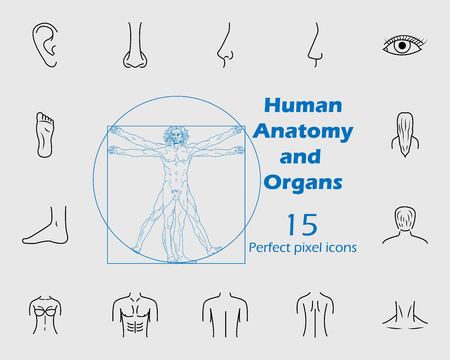 Human anatomy icon set. Premium quality graphic design. Signs, outline symbols collection, simple thin line icon for websites, web design, mobile app, info graphics on grey background Illustration